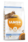 IAMS Cat dental chicken
